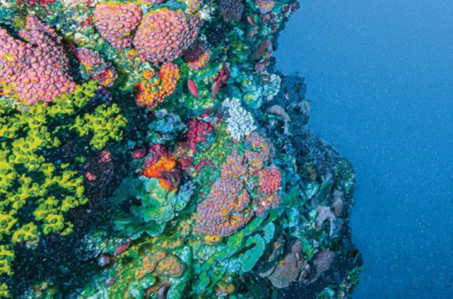 Ocean floor with rocks and coral